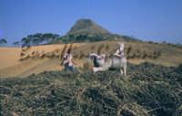 Sicilia 1980/82 civilta' contadina: Nostalgia?  - Mazzarino (4117 clic)