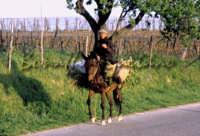 Sicilia 1980/82 civilta' contadina: Nostalgia?  - Mazzarino (3937 clic)