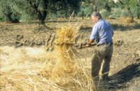 Sicilia 1980/82 civilta' contadina: Nostalgia?  - Mazzarino (3781 clic)