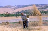 Sicilia 1980/82 civilta' contadina: Nostalgia?  - Mazzarino (3648 clic)