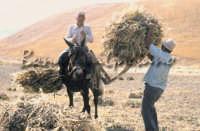 Sicilia 1980/82 civilta' contadina: Nostalgia?  - Mazzarino (4391 clic)