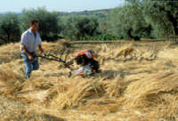 Sicilia 1980/82 civilta' contadina: Nostalgia?  - Mazzarino (4369 clic)