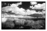 Lungo la statale Agrigento-Naro (Infrared)  - Naro (3774 clic)
