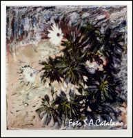 In giardino (Villa Bonfiglio) - SX 70 Expression  - Agrigento (3137 clic)