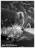Infrared  - Agrigento (1957 clic)