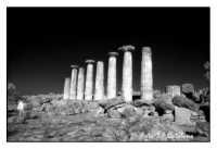 Tempio di Ercole - Colonne del lato Sud  - Agrigento (3609 clic)