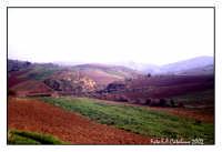 Campagna siciliana - Dia -  - Aragona (5874 clic)