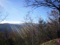 paesaggio  - Longi (6225 clic)