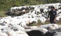 Pastore  - Ucria (6175 clic)