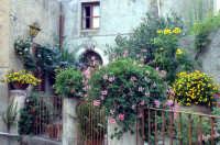 Vicolo  - Piraino (2206 clic)