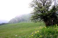 Panorama sui Nebrodi  - Floresta (3260 clic)