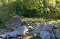 Riserva naturale orientata O rico  - Fiumedinisi (2295 clic)