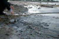 Vulcanelli di fango in eruzione (salinelle)   - Paternò (4166 clic)