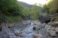 Riserva naturale orientata O rico  - Fiumedinisi (7408 clic)