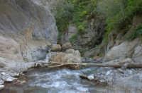 Riserva naturale orientata O rico  - Fiumedinisi (2474 clic)