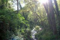 Riserva naturale orientata   - Fiumedinisi (2631 clic)