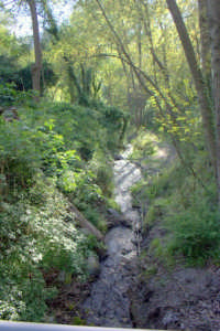 Riserva naturale orientata   - Fiumedinisi (2313 clic)