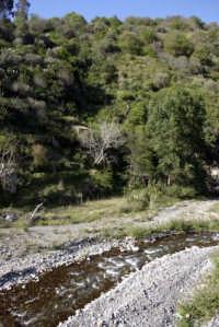 Riserva naturale orientata  - Fiumedinisi (3733 clic)