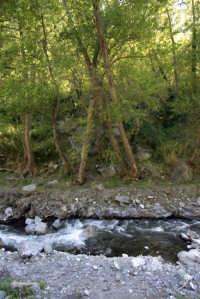 Riserva naturale orientata O rico  - Fiumedinisi (3209 clic)