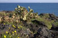 La scogliera (macchia mediterranea)  - Catania (3859 clic)