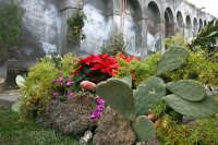 Natale 2005 alla scalinata  - Paternò (1478 clic)