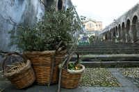 Natale 2005 alla scalinata  - Paternò (1296 clic)