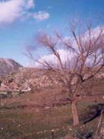 Località Acque Colate di Sagana (Montelepre)  - Montelepre (5683 clic)
