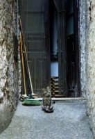 Gattino davanti l'uscio di casa.  - Mongiuffi melia (5177 clic)
