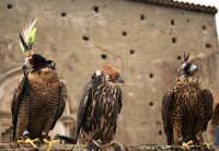 Dimostrazione di volo, con falchi addestrati, durante i festeggiamenti della salita di San Filippo..  - Calatabiano (3533 clic)