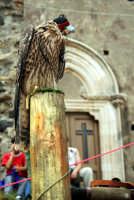 Festeggiamenti della salita di San Filippo.  - Calatabiano (4848 clic)