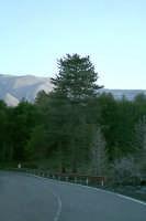 Piano Provenzano, strada.  - Etna (4308 clic)