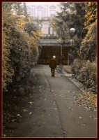 Villa Bellini, un vecchietto si allontana verso la fine del vialetto.  - Catania (2803 clic)