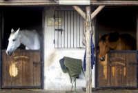 Cavalli al maneggio.  - Santa venerina (5427 clic)