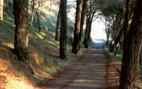 Vialetto della pineta, estate.  - Buccheri (2791 clic)
