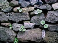 Muro a secco.  - Buccheri (1889 clic)