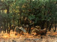 Buccheri - Medfest - La foresta incantata,2.  - Buccheri (5570 clic)