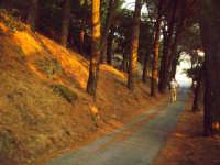 Viale della pineta al tramonto, col solito intruso.  - Buccheri (2061 clic)