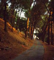 Viale della pineta al tramonto, col solito intruso, che fa finta di essere di passaggio.  - Buccheri (2451 clic)