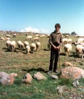 Giovane pastore dei monti Iblei.  - Vizzini (6753 clic)