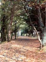 Viale del belvedere Castello-autunno.   - Buccheri (2429 clic)