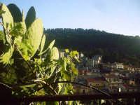 Veduta dall'alto con fichidindia.  - Buccheri (1708 clic)
