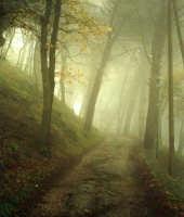 Viale della pineta-inverno.  - Buccheri (2599 clic)