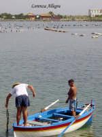 lago di ganzirri - allevamento delle cozze  - Ganzirri (7315 clic)