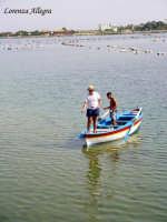 lago di ganzirri - allevamento delle cozze  - Ganzirri (8907 clic)