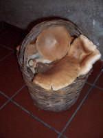 Funci di pampina. Foto Giovanni Sarlo  - San mauro castelverde (2317 clic)