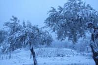 Ulivi sotto la neve  - San mauro castelverde (4909 clic)
