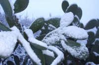 Fichidindia sotto la neve  - San mauro castelverde (4267 clic)