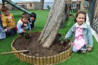 I bambini della scuola materna piantano i fiori nelle aiuole del nuovo parco giochi.   - San mauro castelverde (1161 clic)