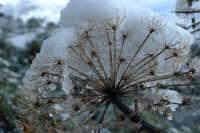 Ferla sotto la neve  - San mauro castelverde (4736 clic)