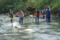 Traversata del fiume Pollina  - San mauro castelverde (4469 clic)